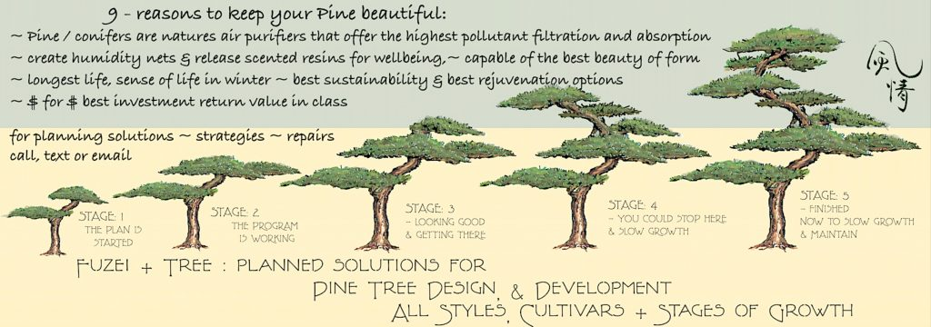 Darwinian pine banner showing step by 5 step pine tree development