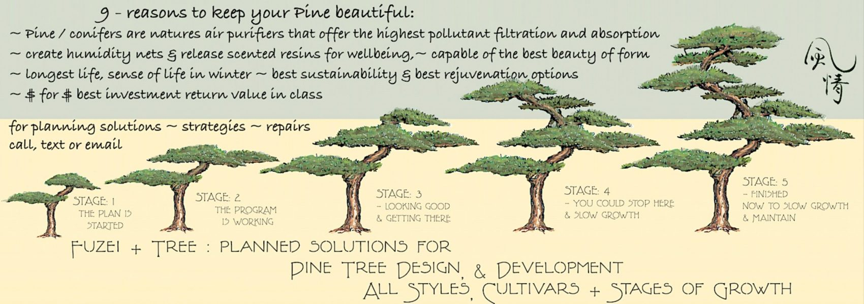pine banner showing step by 5 step pine tree development